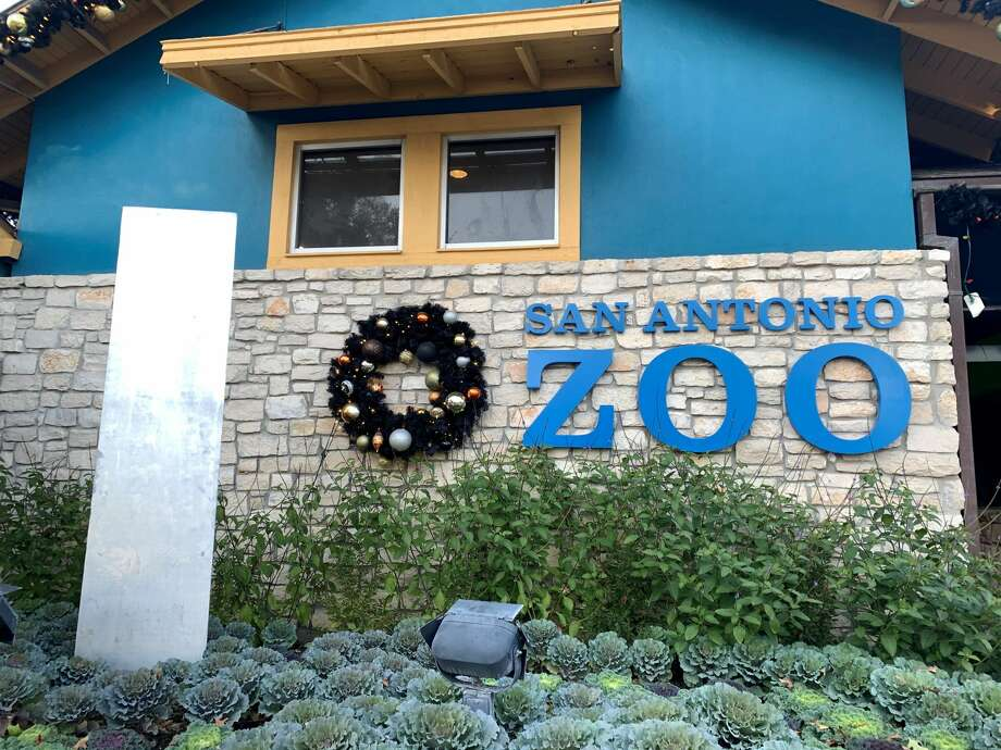 the mysterious monolith that keeps popping up across the globe, adding to the unique nature of 2020, pays a visit to the San Antonio Zoo. Photo: San Antonio Zoo, Courtesy