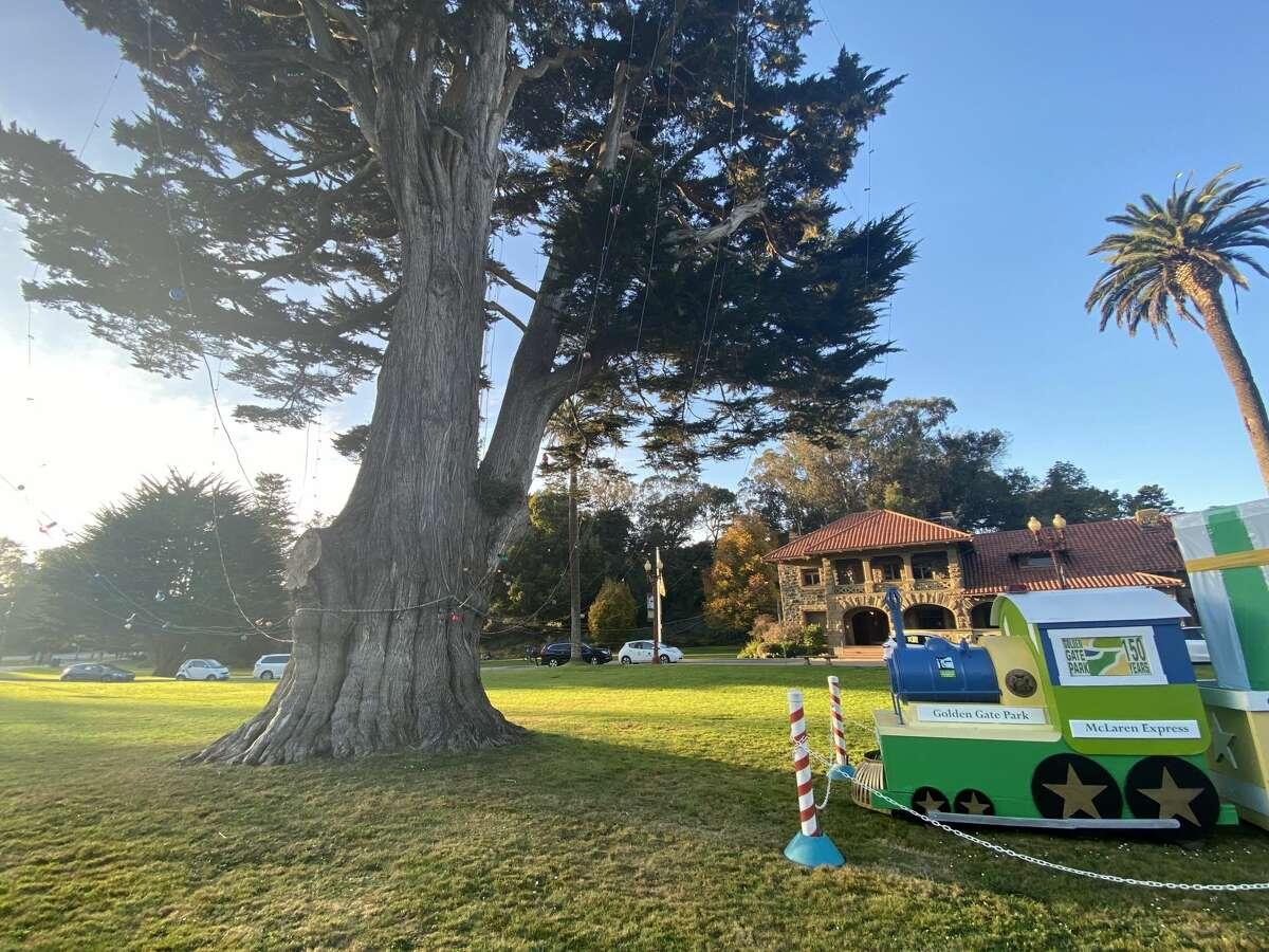 Uncle John's Tree, Golden Gate Park, San Francisco, December 2020.
