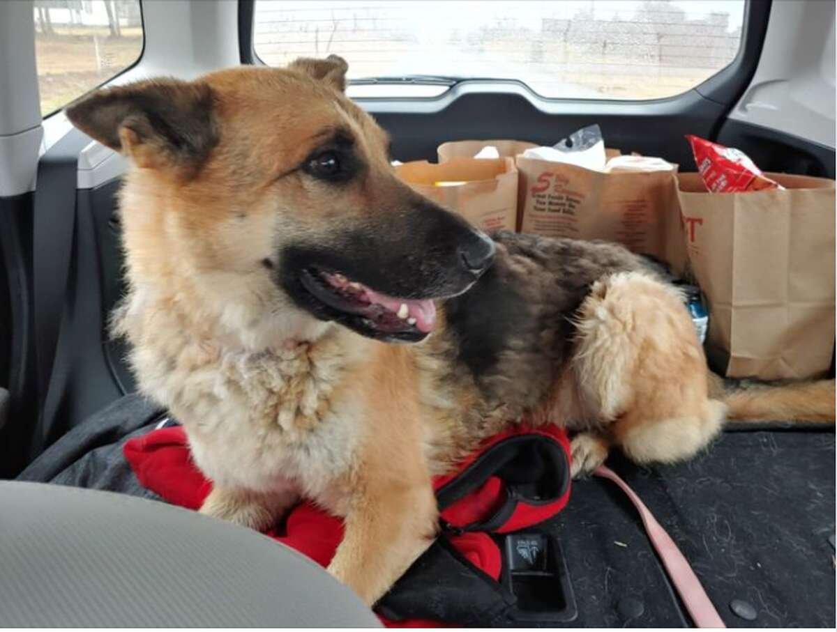 How did this Pasadena dog, Luna Rose manage to get all the way to Oklahoma City? That's what her owner Susan Ray wants to know. Right now, she's just happy to have her nomadic pup back home.
