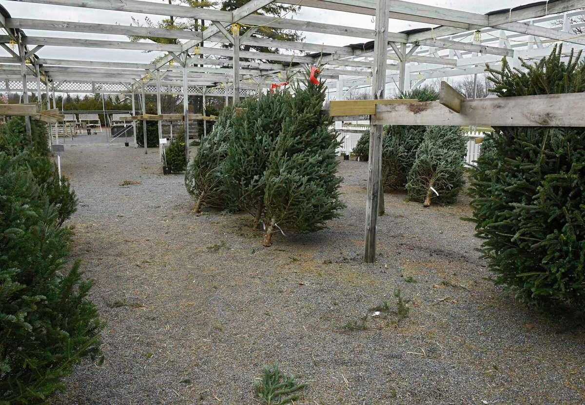 Faddegon's Nursery has already sold hundreds of Christmas Trees Tuesday, Dec. 8, 2020 in Latham, N.Y. (Lori Van Buren/Times Union)