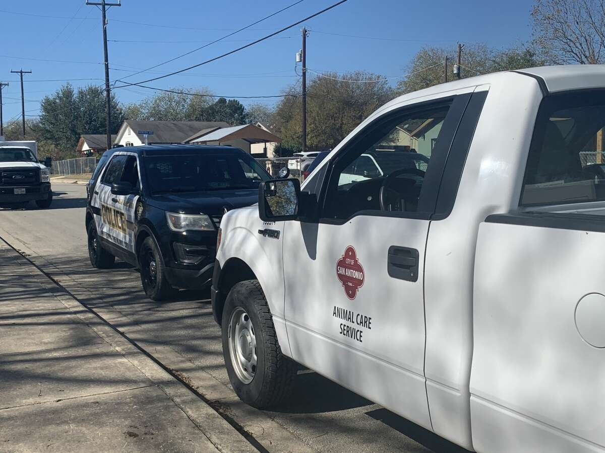 A tip from a concerned citizen led officials to the discovery of nearly 200 roosters and hens at two South Side properties that are likely a part of a cockfighting ring, according to San Antonio Animal Care Services.