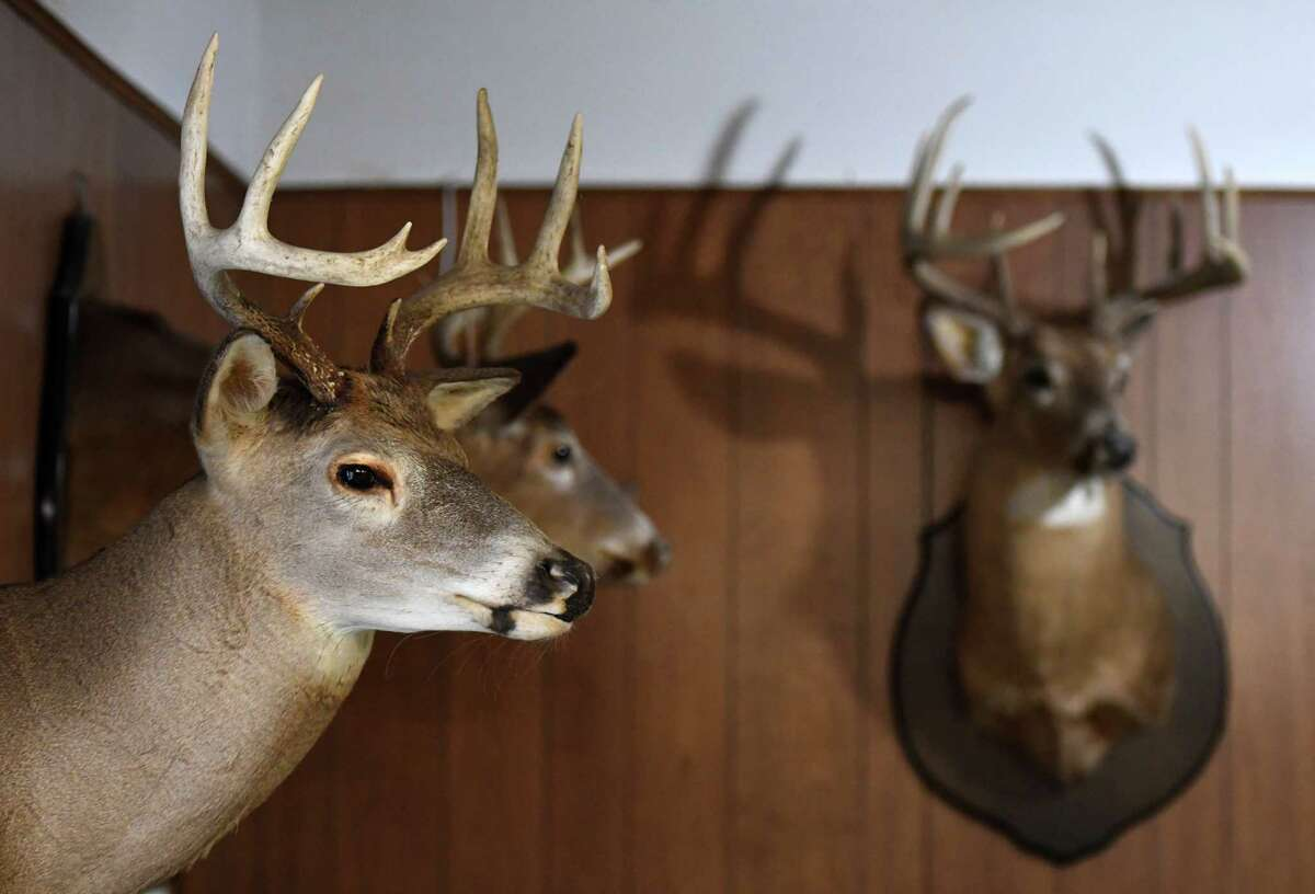 Trophy deer head are displayed at Brown's Archery Shop on Tuesday, Dec. 8, 2020, in Schenectady, N.Y. Store owner Mick McGuinness has seen a jump in business reflecting the increased demand for state hunting licenses. (Will Waldron/Times Union)