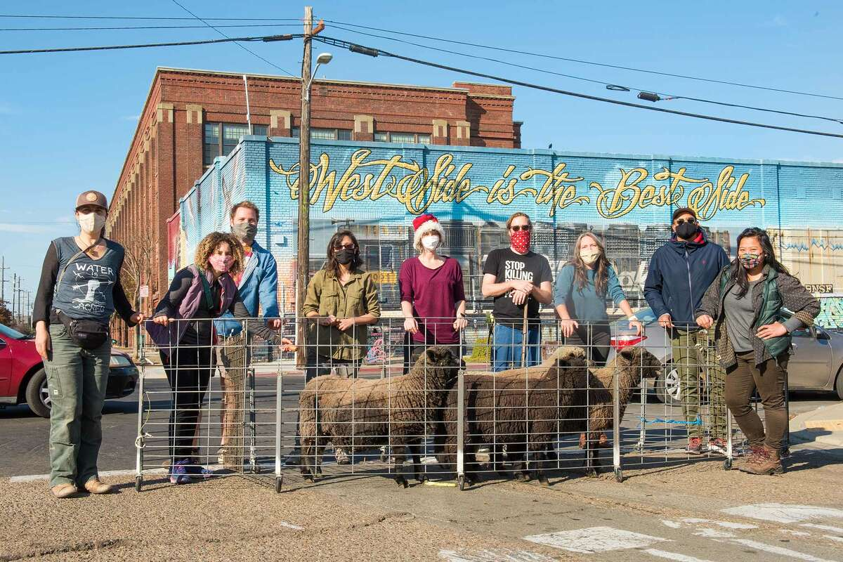 The team of shepherds and volunteers at Oakland Sheep pose with their flock.