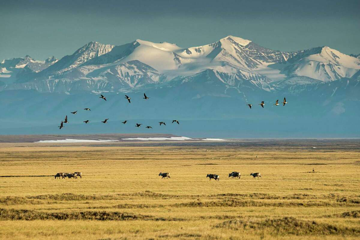 Wildlife in front of the peaks of the Brooks Range in the Arctic National Wildlife Refuge in Alaska, June 20, 2019. The Trump administration announced Nov. 16, 2020, that it would begin selling oil leases for the Arctic National Wildlife Refuge in Alaska. (Christopher Miller/The New York Times)