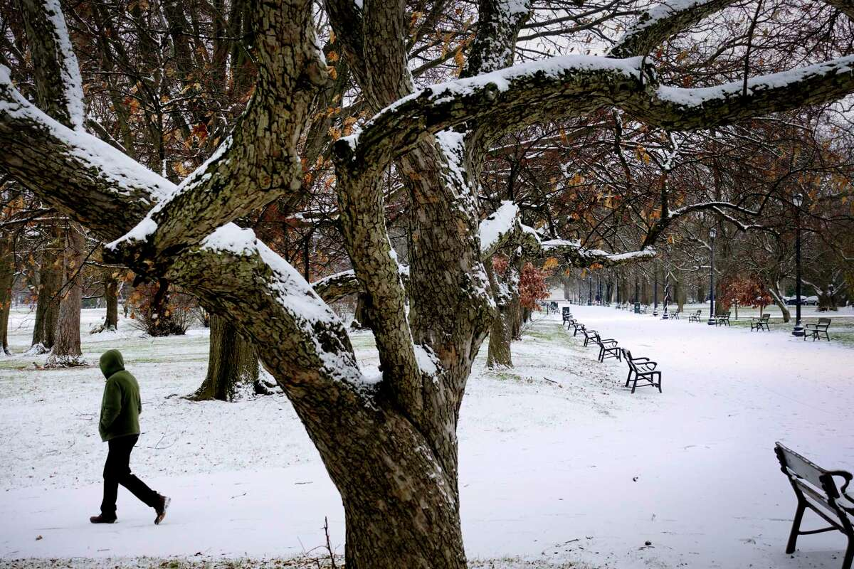 FILE. Letter writer talks about doing more to protect trees in Washington Park like this snow-covered one from Dec. 9, 2020, in Albany, N.Y. (Paul Buckowski/Times Union)