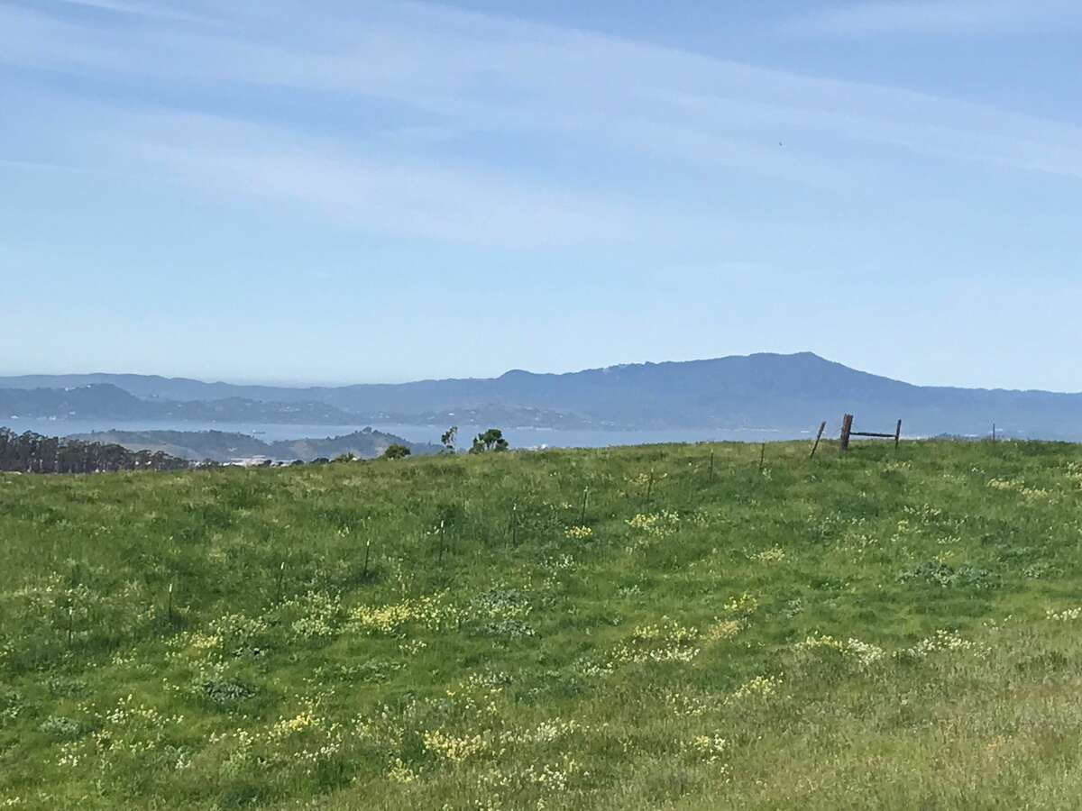 A view of Mount Tamalpais from the Nimitz Trail in Wildcat Canyon in Richmond, Calif.