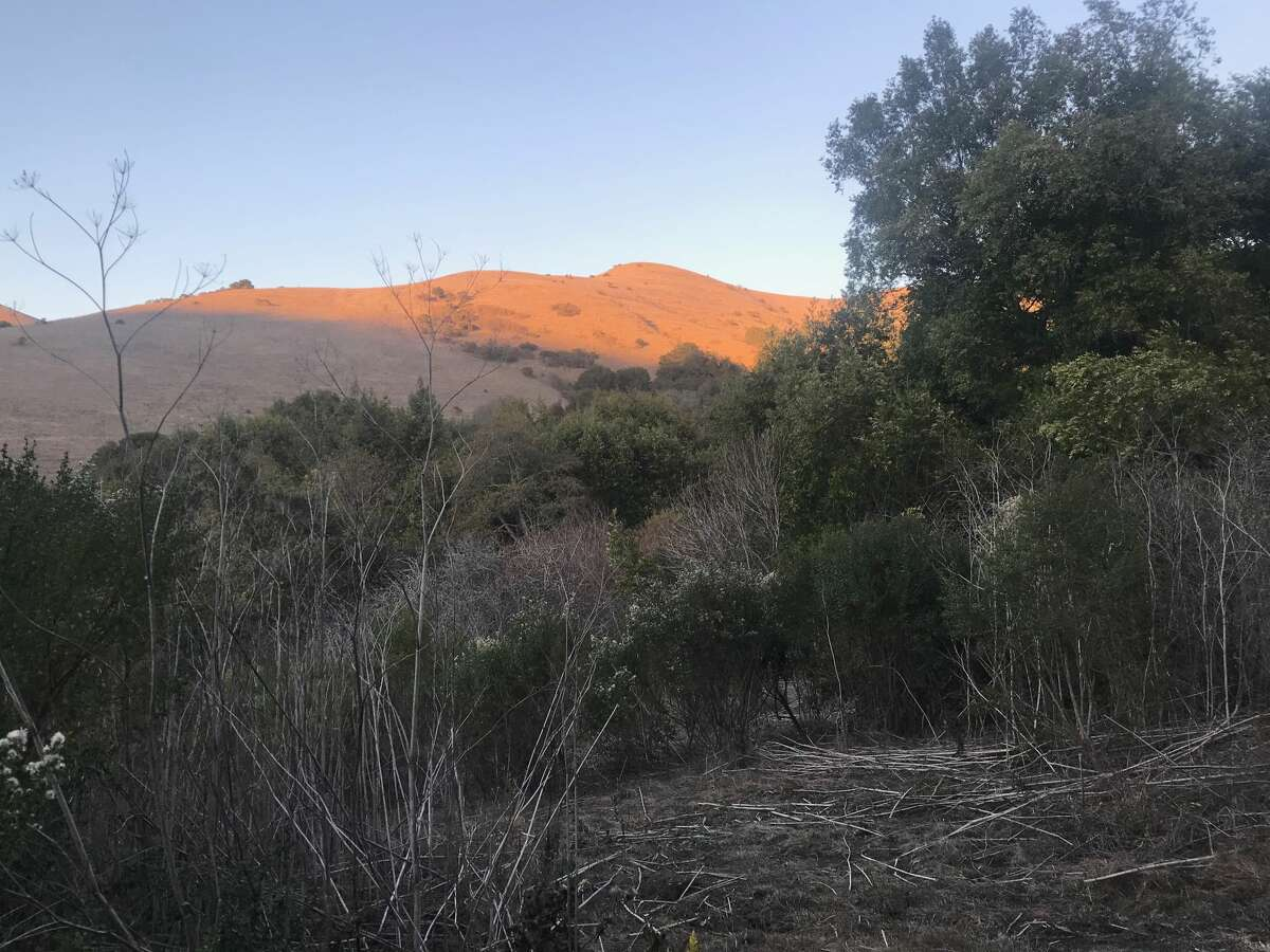 A beautiful hike on the Rifle Range Road Trail in Wildcat Canyon in Richmond, Calif.