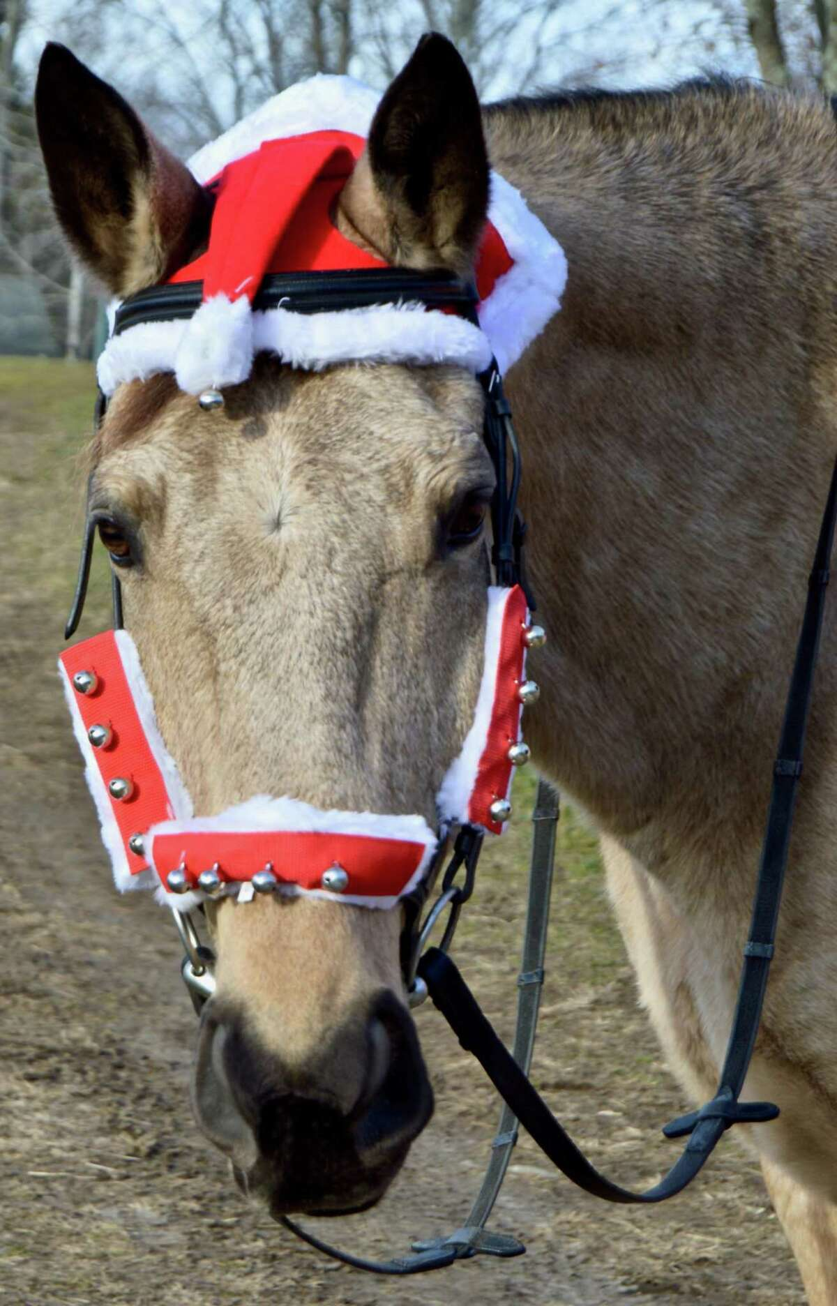 Reggie, a resident horse at H.O.R.S.E. of Connecticut, is dressed up and ready for the farm's Christmas Open House Dec. 12.