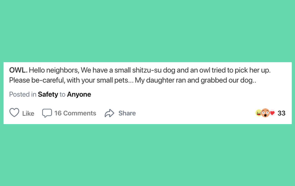 A local on Nexdoor wrote that an owl tried to grab their small Shih Tzu.