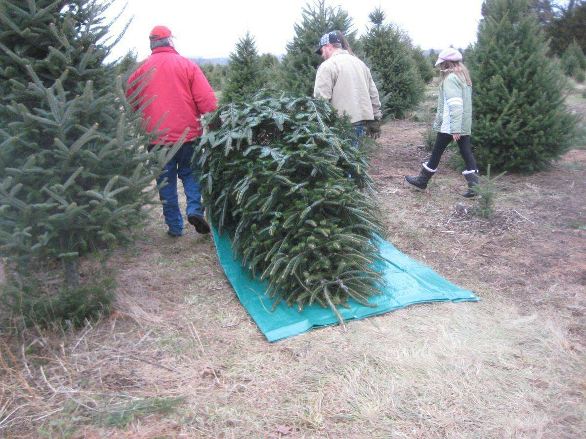 Tom Harbinson, facilities and hospitality manager, Jones Family Farm and Winery, said the quietest time to visit the tree farm is on weekday mornings.