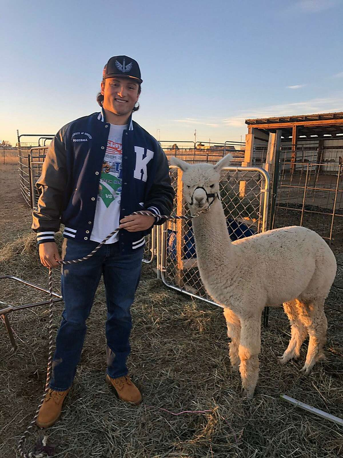 Drew Schlegel poses with an alpaca at Cloverleaf Farms in Elizabeth, Colo. The Cal fullback wants to be an alpaca farmer, among his array of interests. The first sight of the cuddly creatures made him stop his car in Colorado and wander a farm.