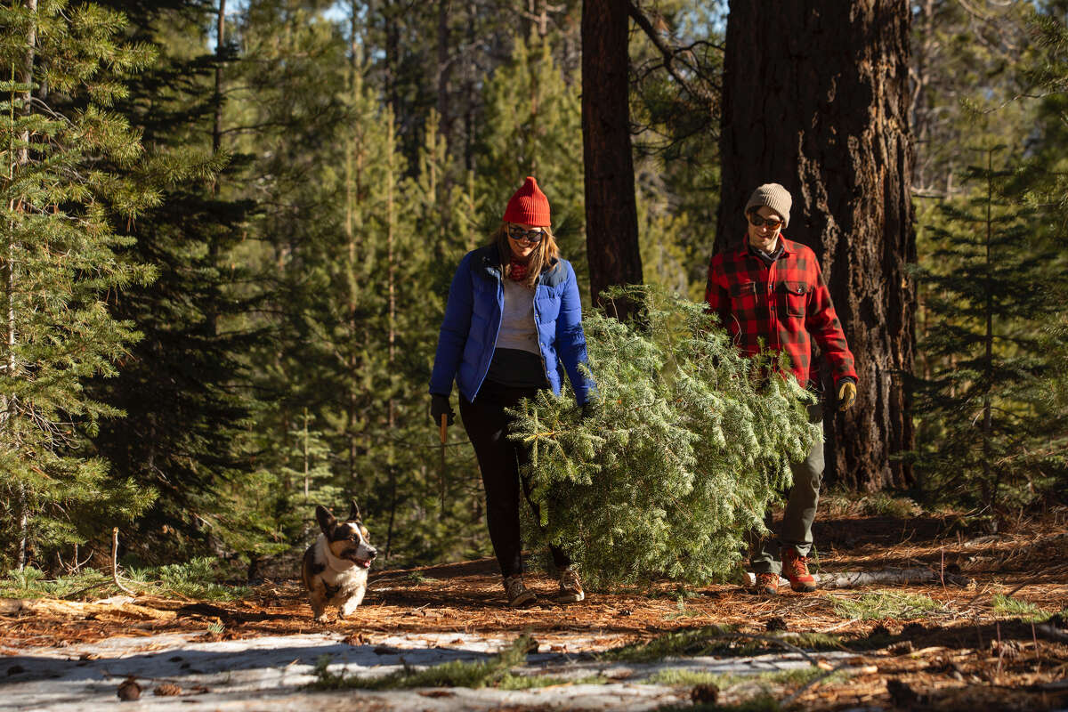 A family searches for a Christmas tree.