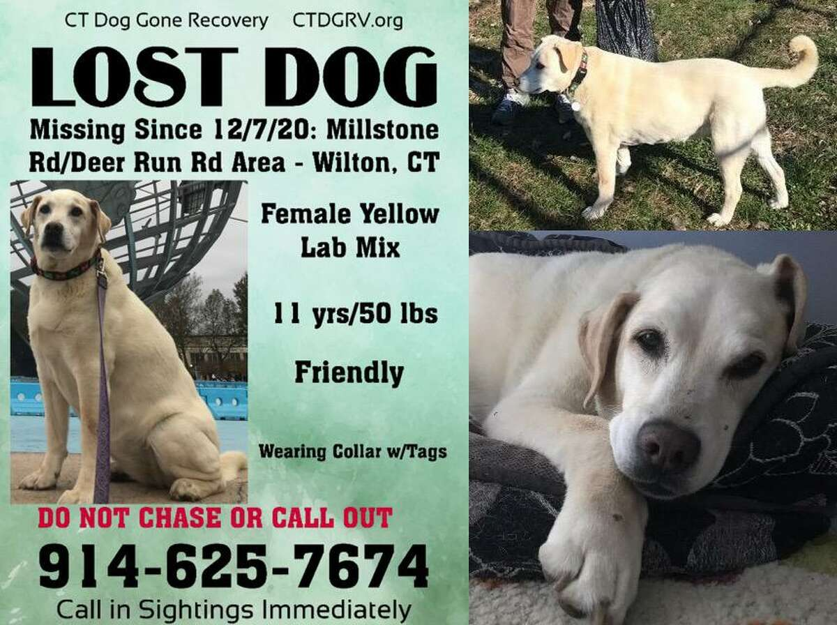 This is one of the posters Brandi Solomon has placed around town in the hopes someone can help her find her dog, Lexi, who went missing on Dec. 7, 2020.