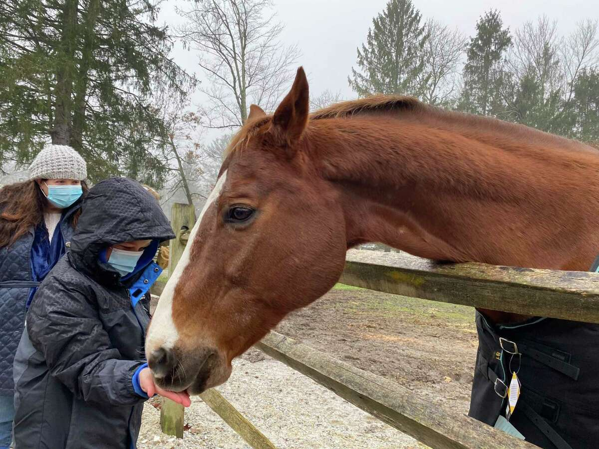 A boy feeding one of the rescued horses at a fund-raiser for H.O.R.S.E. of Connecticut in Washington on Saturday, Dec. 12.