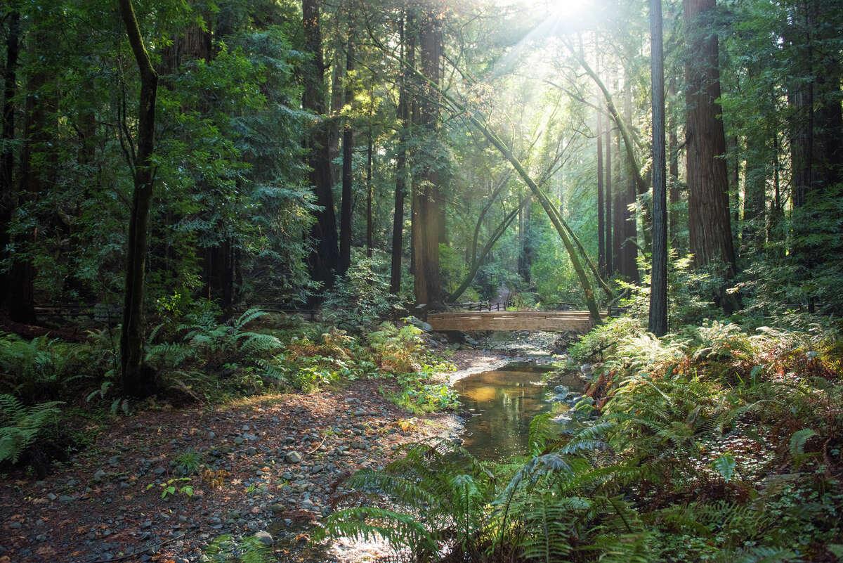 Muir Woods, Dec. 14, 2020.