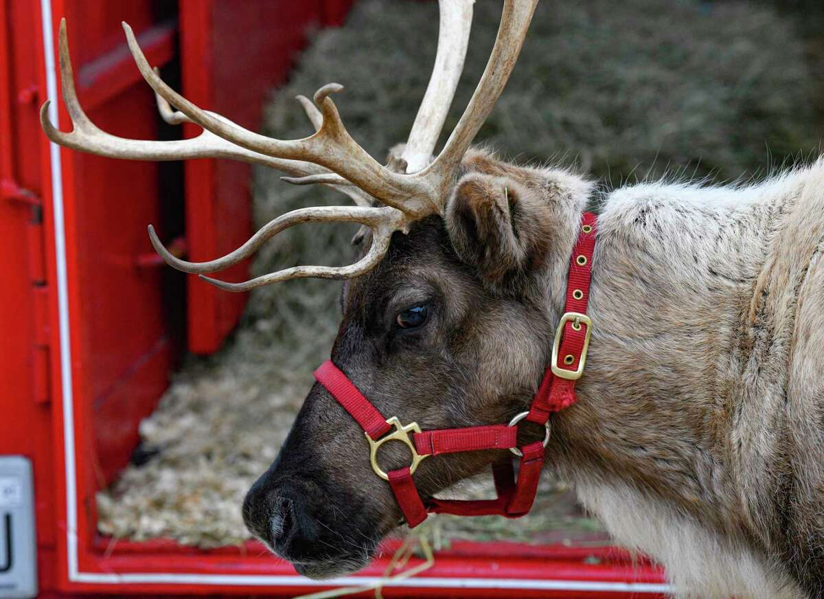 A reindeer named Holly prepares to meet children at Northwest Hills United Methodist Church. Holly is one of four reindeer with Zoomagination, a nonprofit in Atascosa.