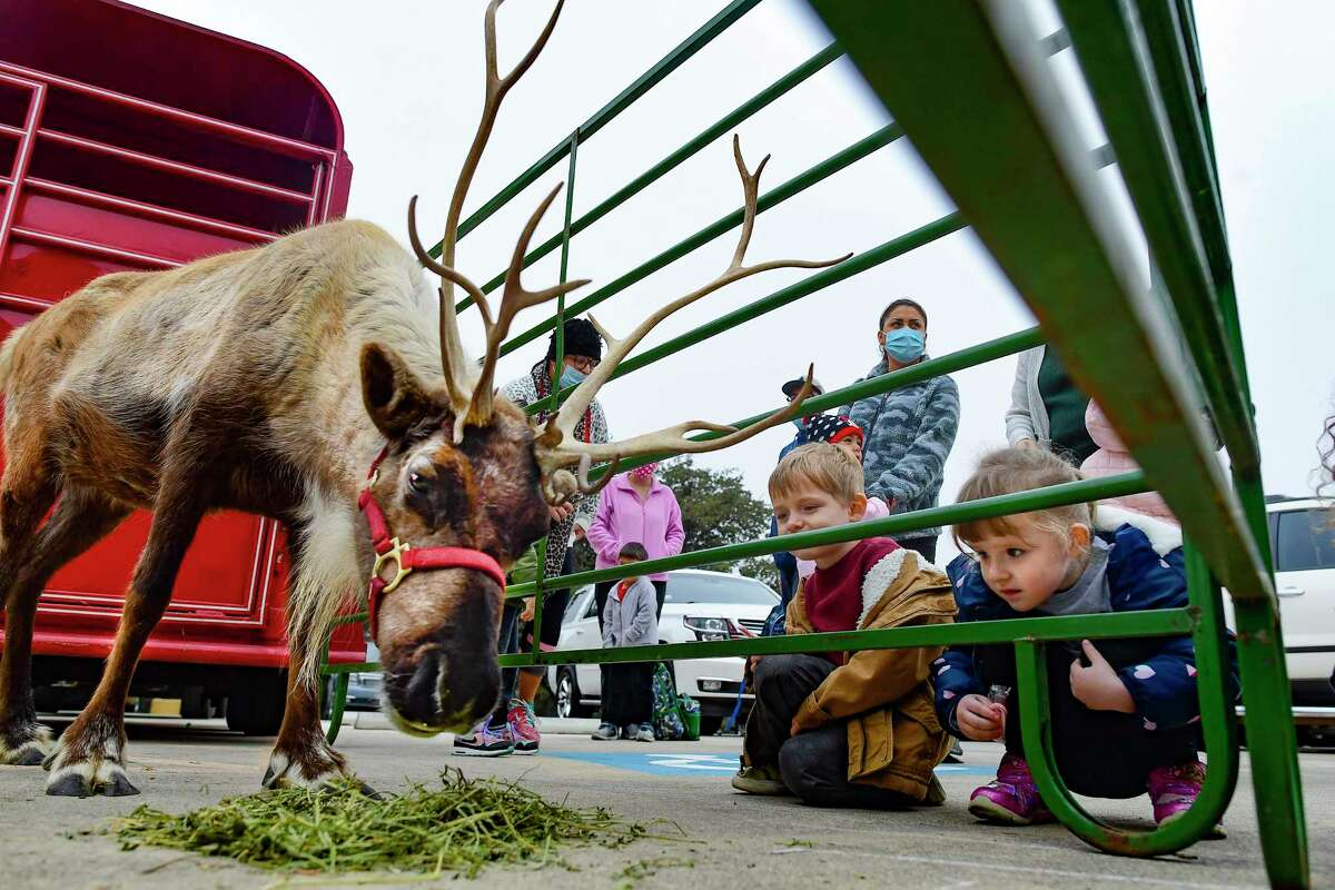 Abigale and Max Blakley, who are 3-year-old twins, enjoy a reindeer named Holly at Northwest Hills United Methodist Church. The reindeer are part of Zoomagination, a nonprofit in Atascosa that has several exotic animals.