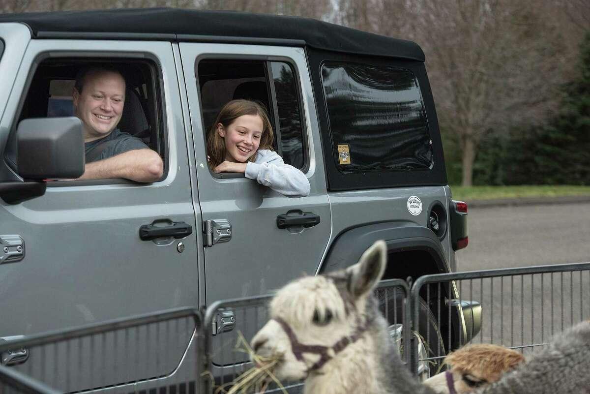 Ella Wyman checks out an alpaca at the Wilton Presbyterian and St. Matthew's Episcopal churches' drive-by living nativity on Sunday.