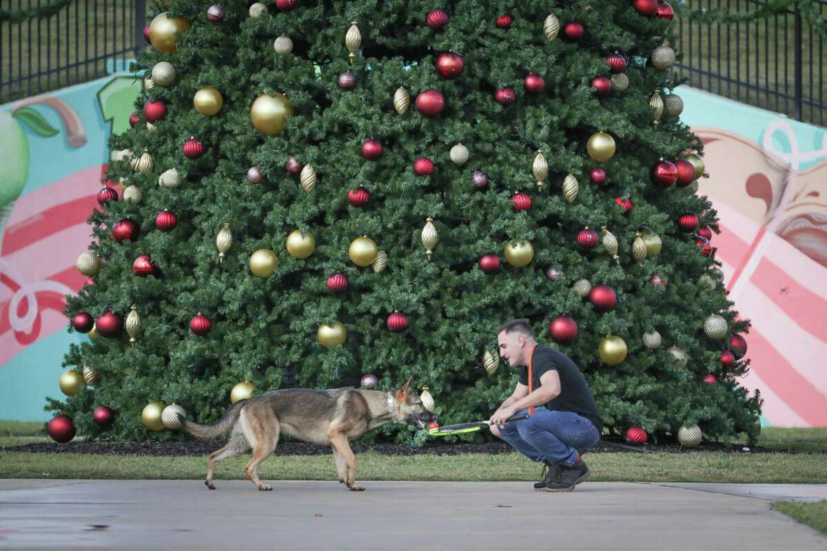 Paul Hamilton plays with his one-year-old German Shepherd Ada in front of a large Christmas Tree in Independence Park Wednesday, Dec. 2, 2020, in Pearland.