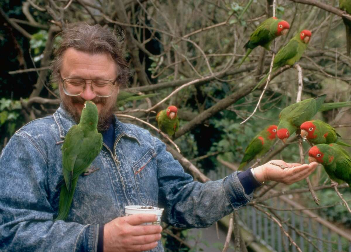 A photo of Mark Bittner feeding sunflower seeds to the wild parrots that descended onto the deck of his cottage in Telegraph Hill in San Francisco.