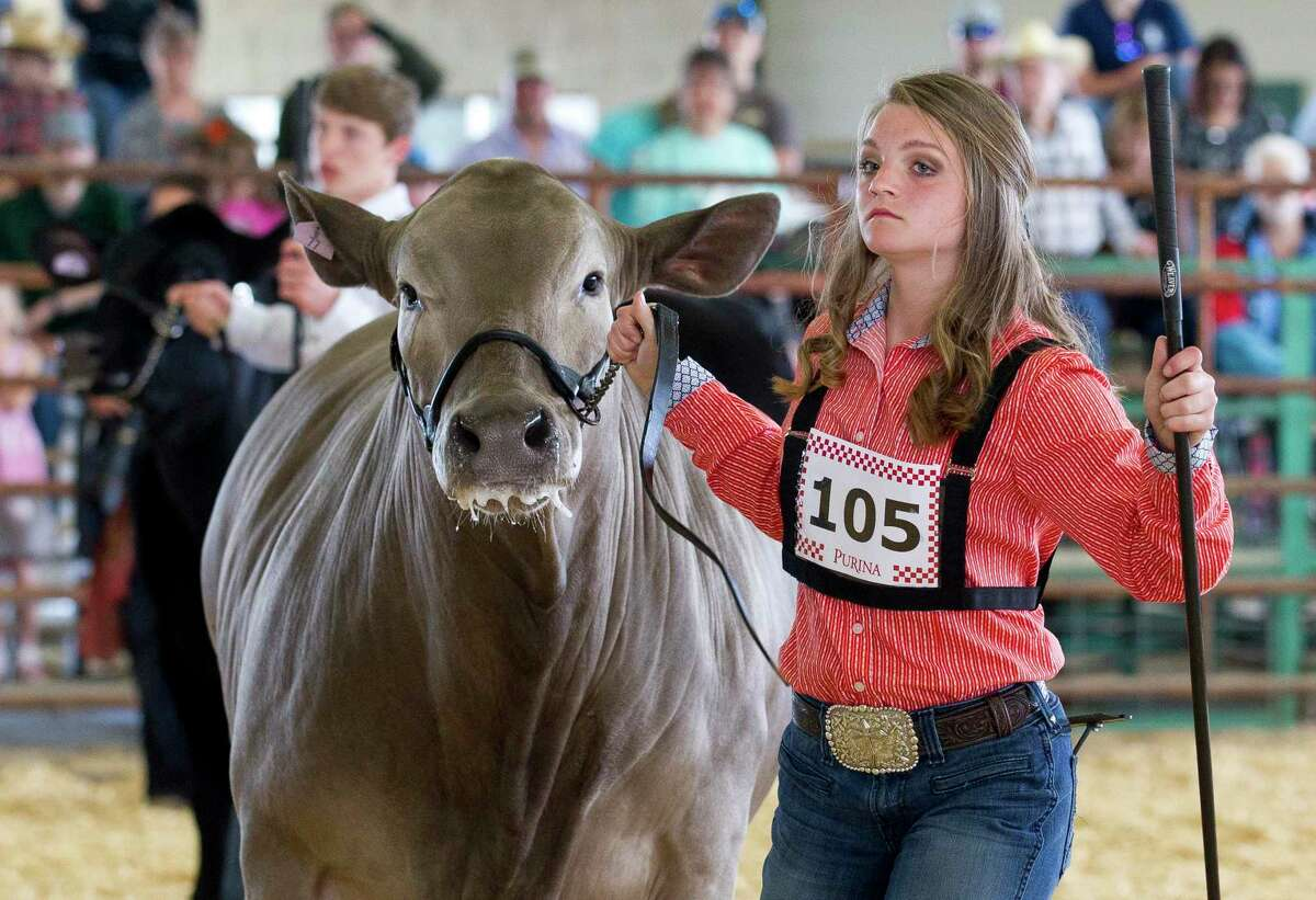 Karli Reeves of Montgomery FFA shows her steer before the market steer show at the Montgomery County Fair and Rodeo, Tuesday, April 2, 2019, in Conroe.