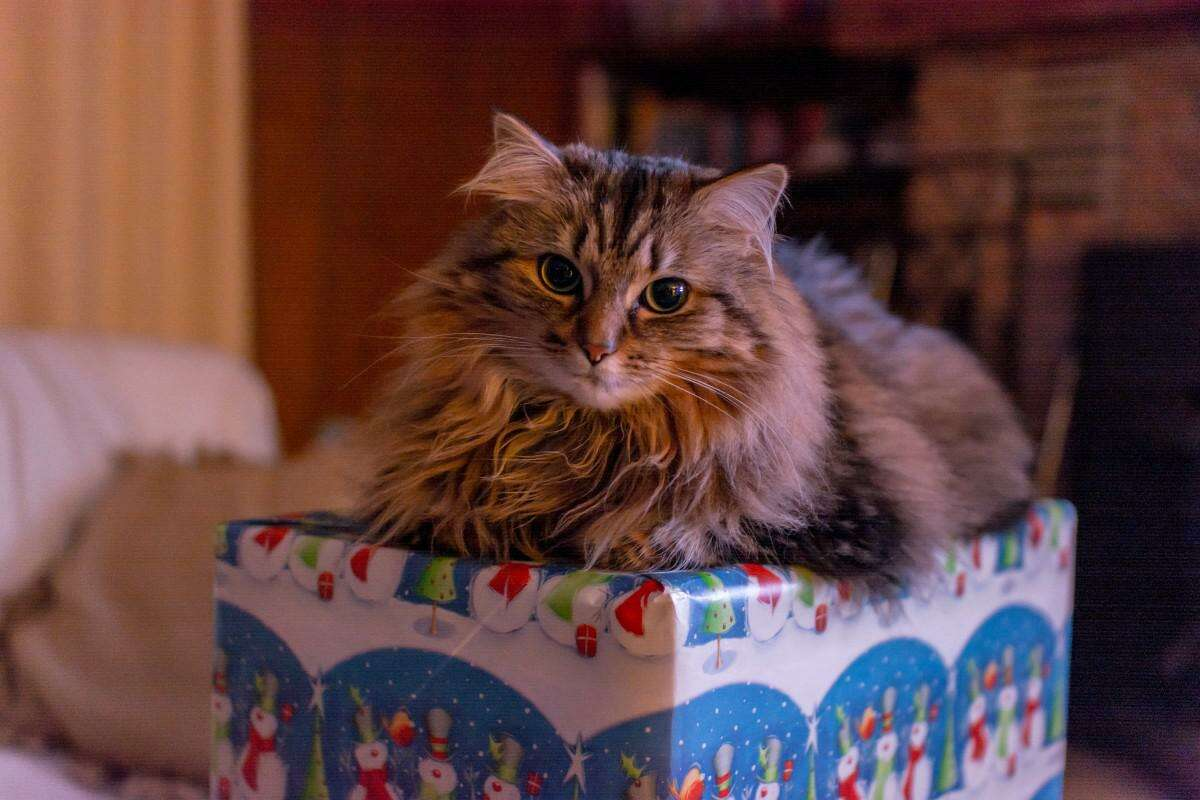 Homemade gifts with pets involved come with a bit a planning.