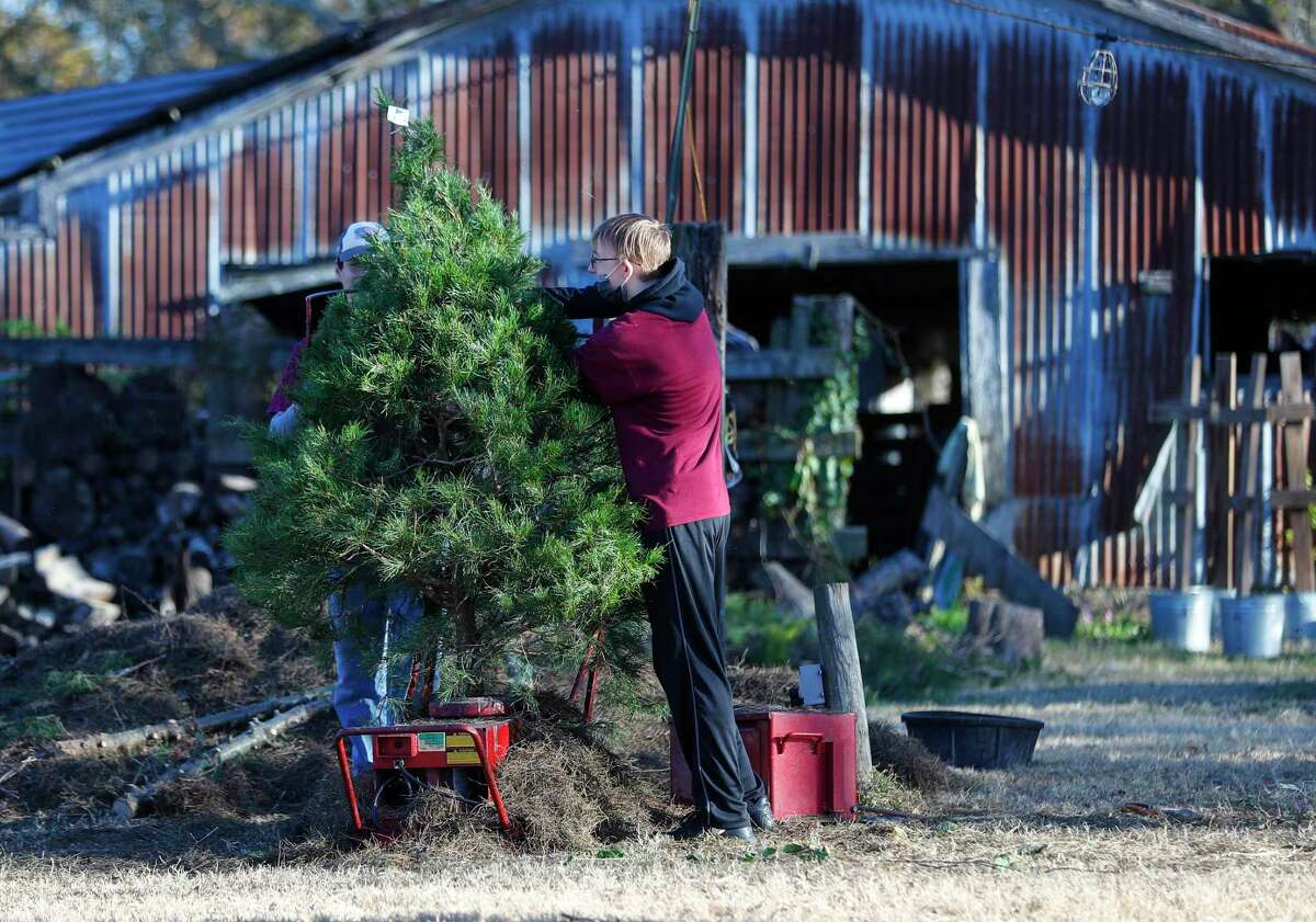 Nathan Tucker, 15, shakes a tree, ridding it of dead pine needles for a customer at Holiday Acres Farm, a Christmas tree farm, Thursday, December 10, 2020, in Manvel.