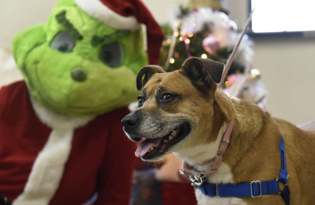 Were you seen at the holiday pet photo event Dec. 12, 2020, at the Saratoga County Animal Shelter? Go to their website to find out about more events and animal adoptions.