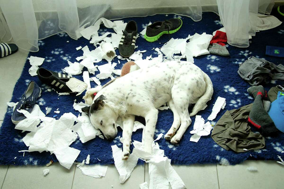 Dogs that are destructive are usually bored, bu there are several things that can help.