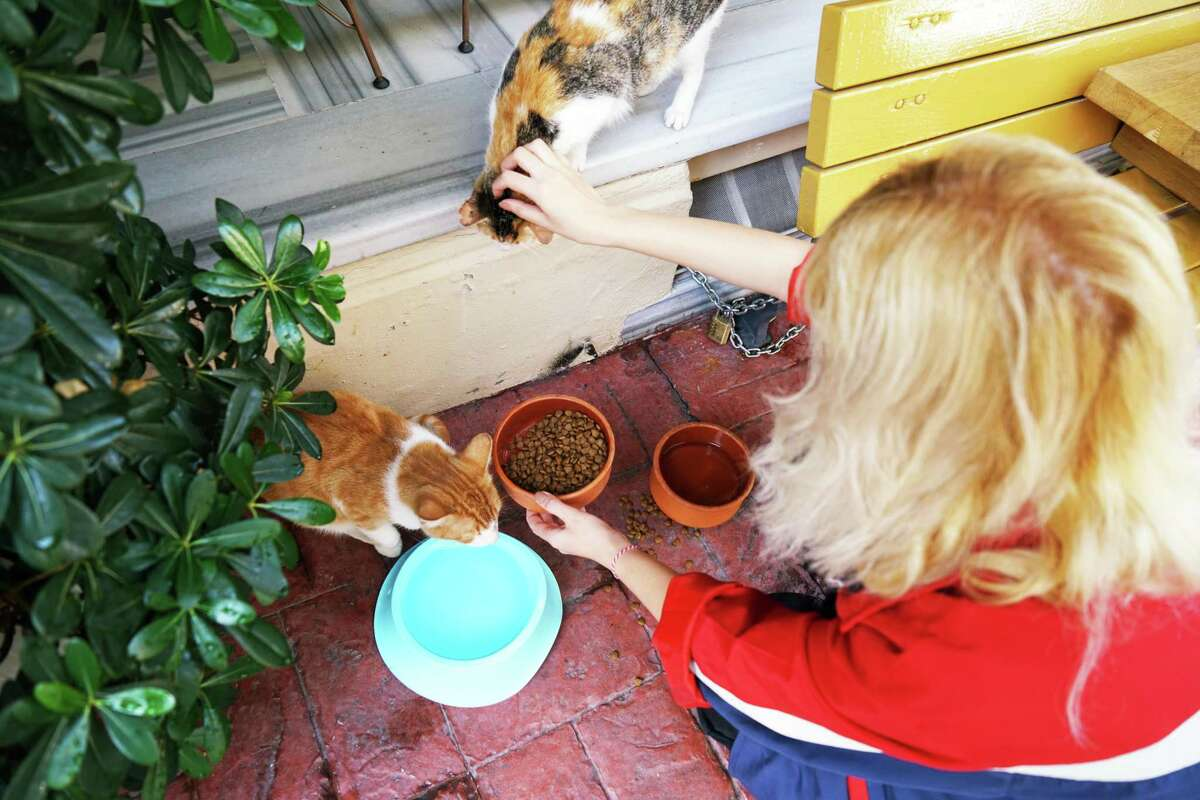 Both domesticated and feral cats do make friends with other cats, and they can mourn greatly when a friend dies.