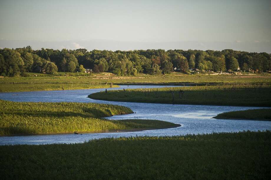 The Tittabawassee River winds through the lakebed of Sanford Lake, which is now covered in new growth, Thursday, Sept. 3, 2020 in Sanford. (Katy Kildee/kkildee@mdn.net) Photo: (Katy Kildee/kkildee@mdn.net)