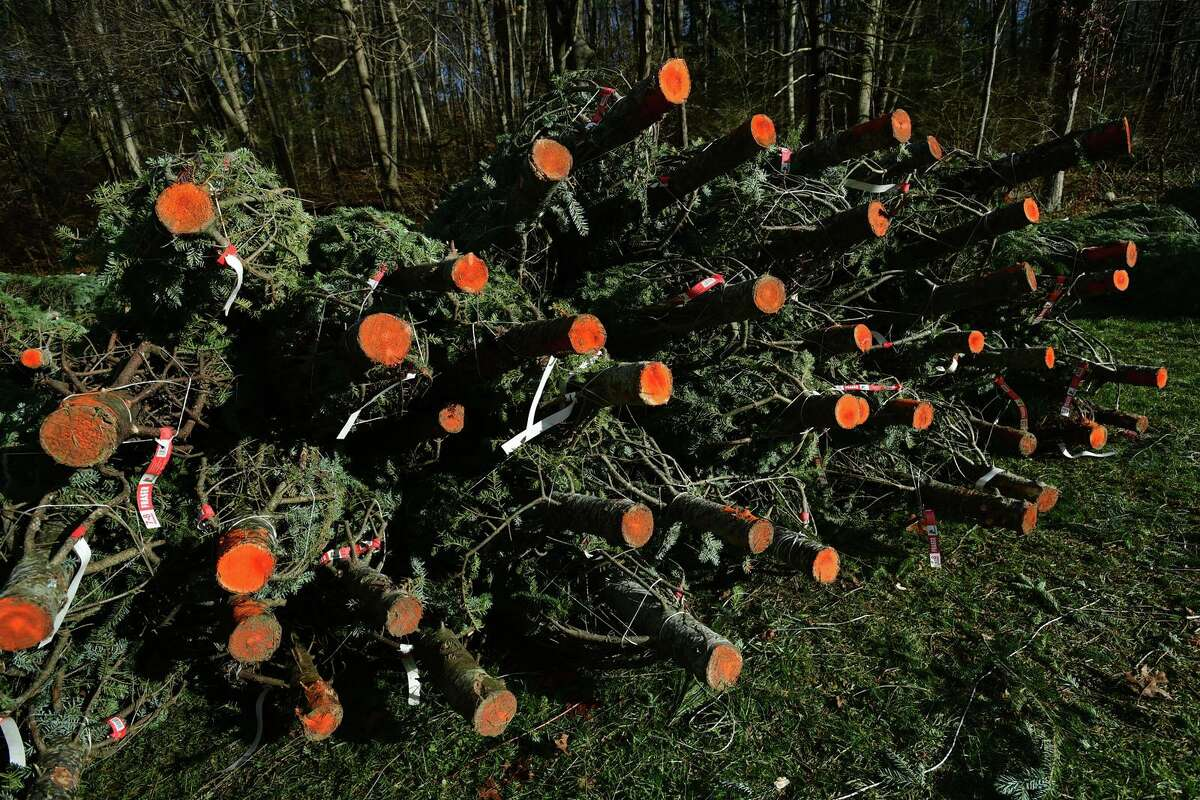The Exchange Club Christmas tree sale Tuesday, December 1, 2020, at Kiwanis Park in New Canaan, Conn. More people are buying fresh trees and buying them earlier this year.