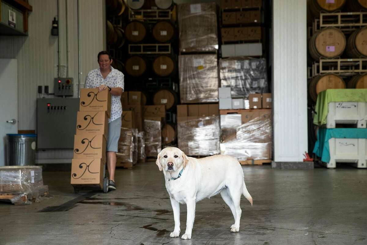 Charlie the winery dog is seen at Harney Lane Winery in Lodi, Calif., on Friday, October 11, 2019. The family owned winery produces 100% estate grown wines.
