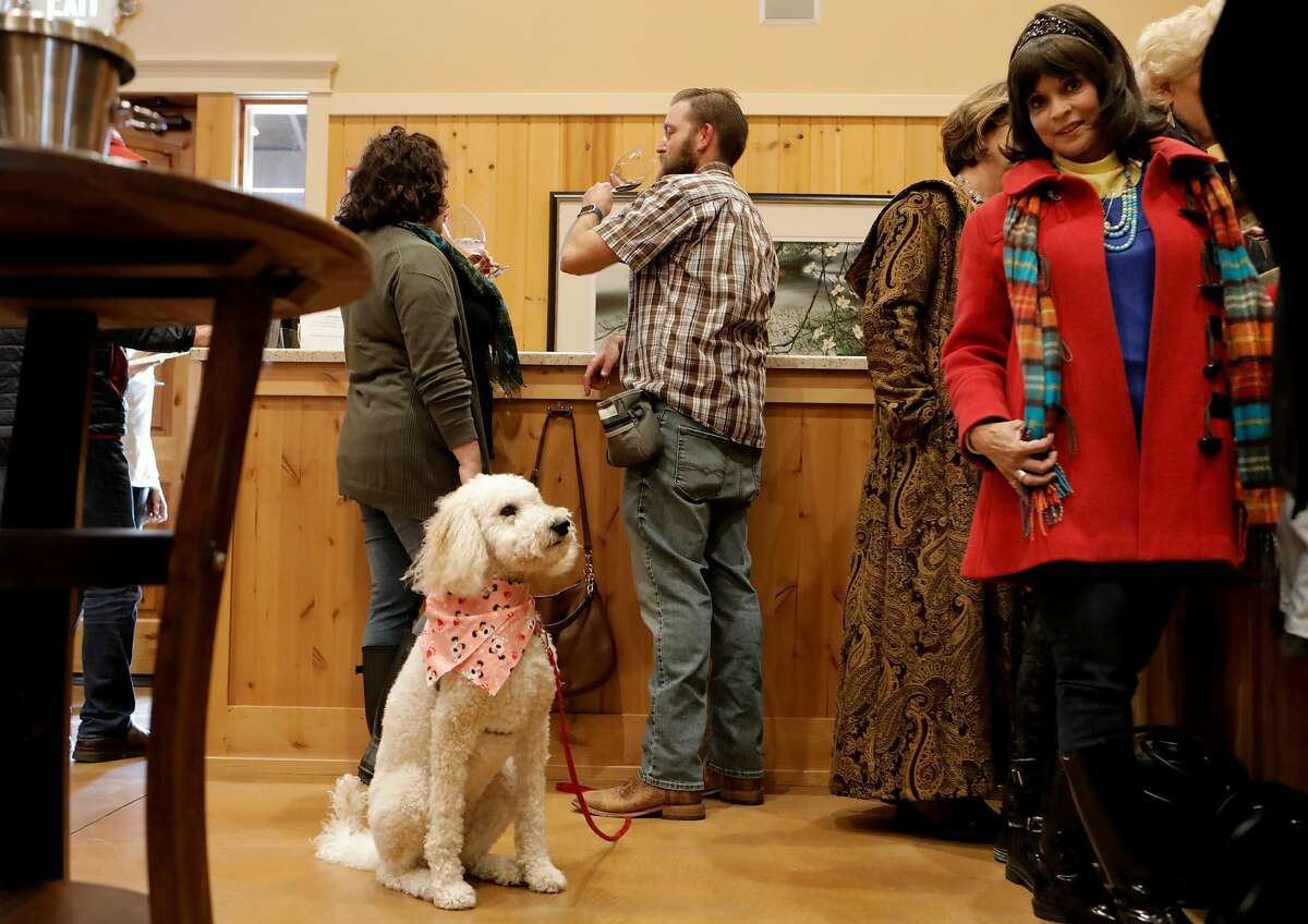 Katie and Allen Gill, (center) of Orangevale brought along their dog,
