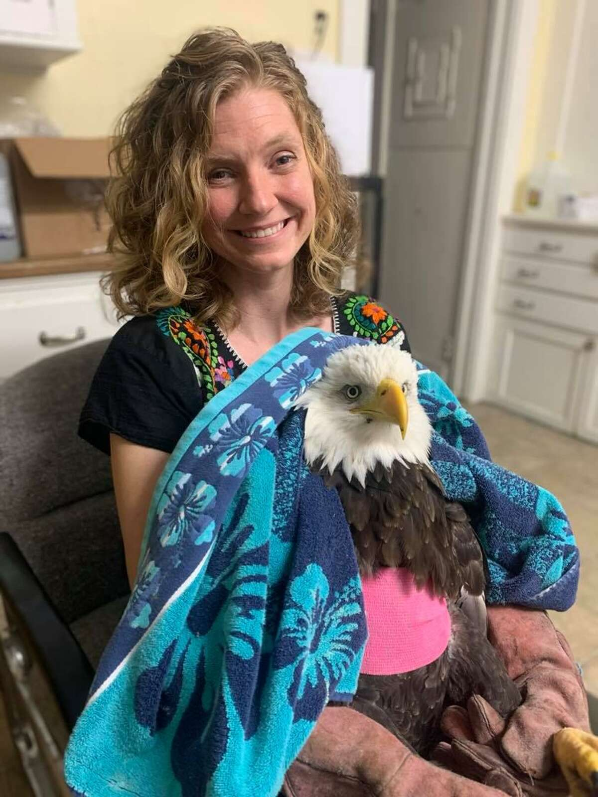 The bald eagle being cared for at the Sharon Audubon Center in Sharon, Conn.