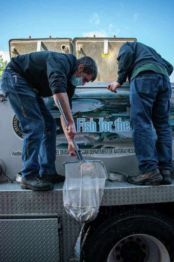 Grayling are removed from a fish transport truck and carried into the Marquette State Fish Hatchery in Marquette County. (Courtesy photo/Michigan Department of Natural Resources)