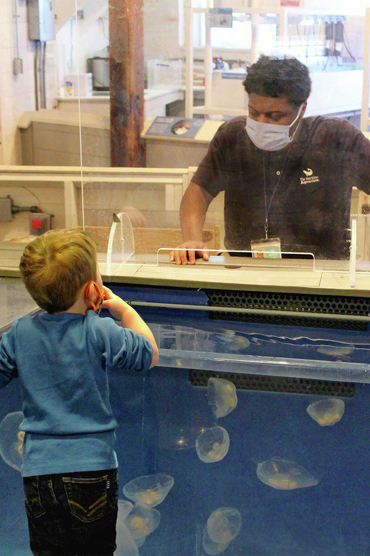 NORWALK, CT - Registration is open now for an upcoming training course to become a volunteer at The Maritime Aquarium at Norwalk. Anyone over age 15 can apply to learn how to interpret exhibits - like the