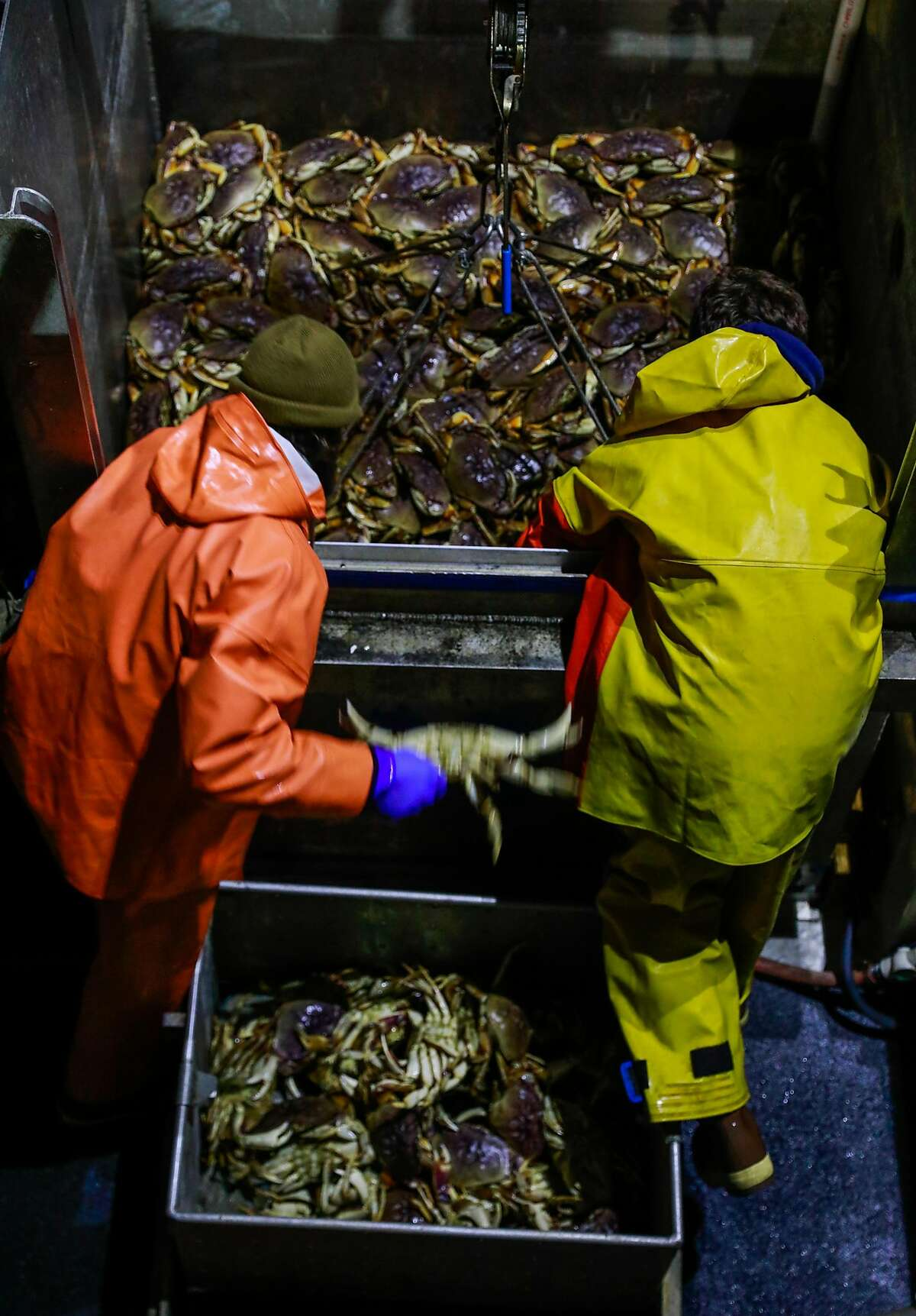 Fisherman empty a container of Dungeness crab into a metal bin to be hauled ashore to Fisherman's Wharf on Pier 45 in 2019. Right now, local crabbers are waiting to being working until a suitable wholesale price is established.
