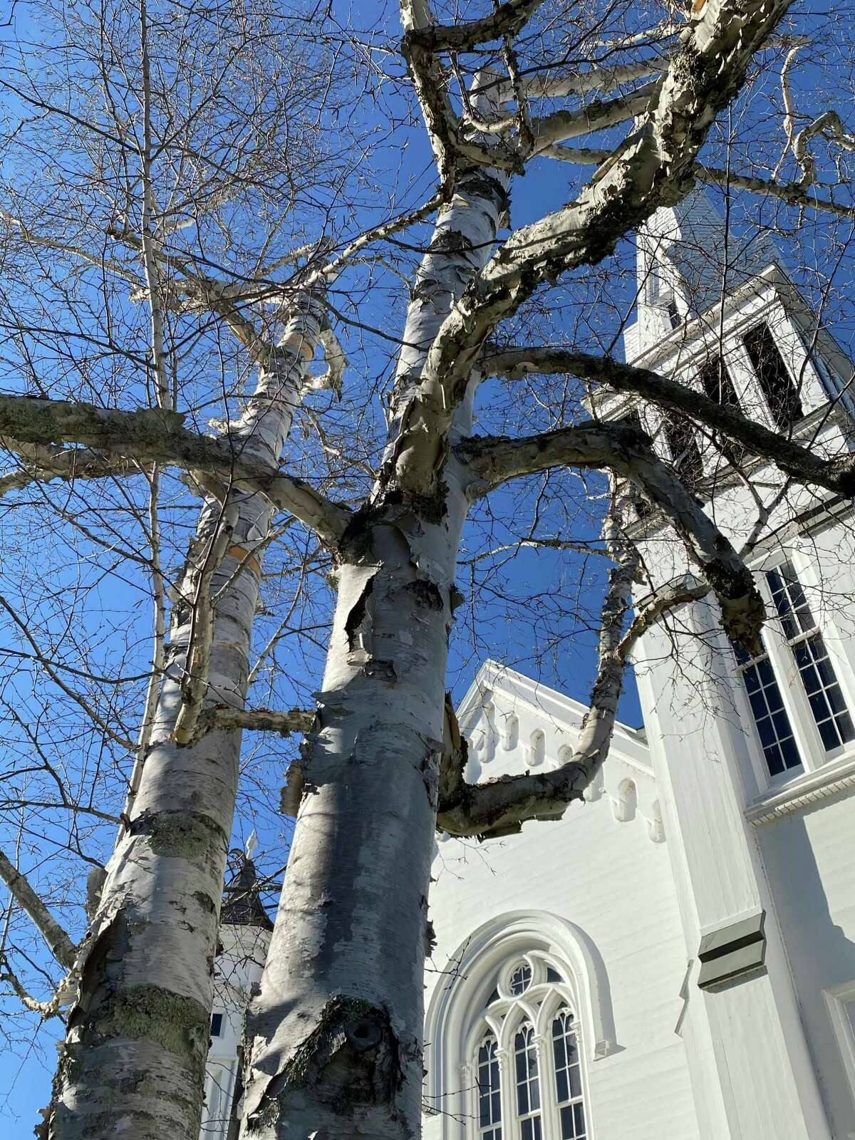 The might of this lone tree creates a striking statement in front of the First Congregational Church of Kent.