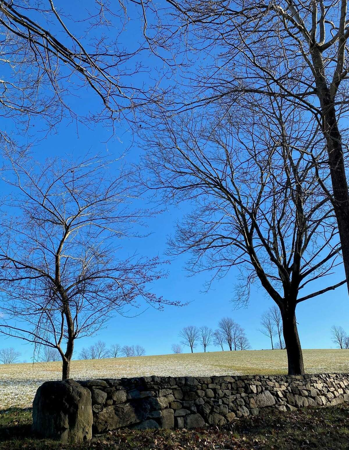 Trees of all shapes and sizes adorn the rolling hills of Litchfield County. Even leafless for winter, these trees along Plumb Hill Road in Washington remind us of their grandeur and imperfect beauty.
