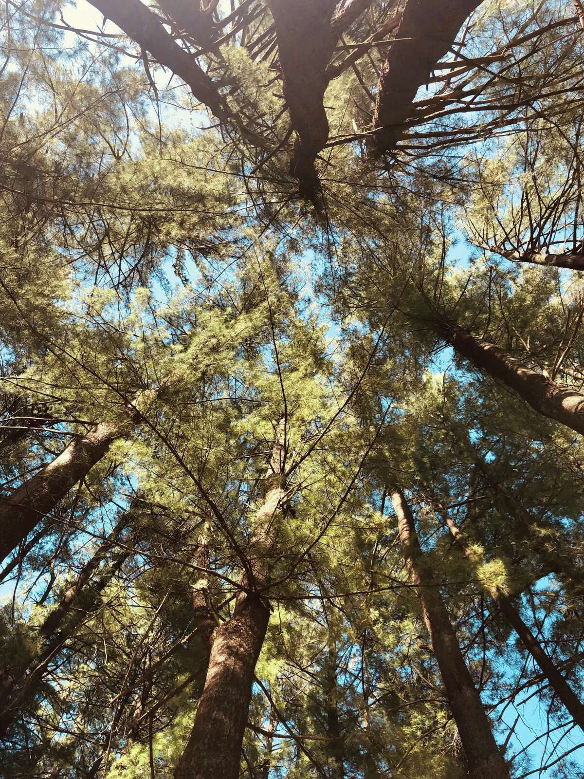 On any given day, visitors to Harrybrooke Park in New Milford can find shade beneath a variety of trees. And the view while seeking refuge from the sun can be, if looking up, stunning. A change in perspective can make all the difference.