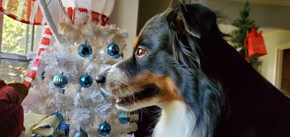 He's got Santa on his mind.