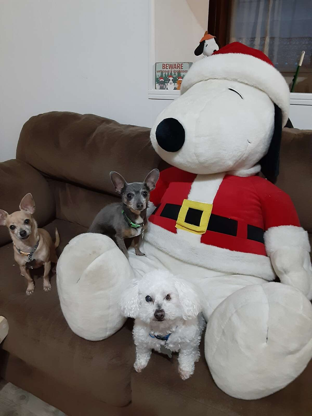 These pups didn't get a picture with Santa this year, but they got the next best thing.