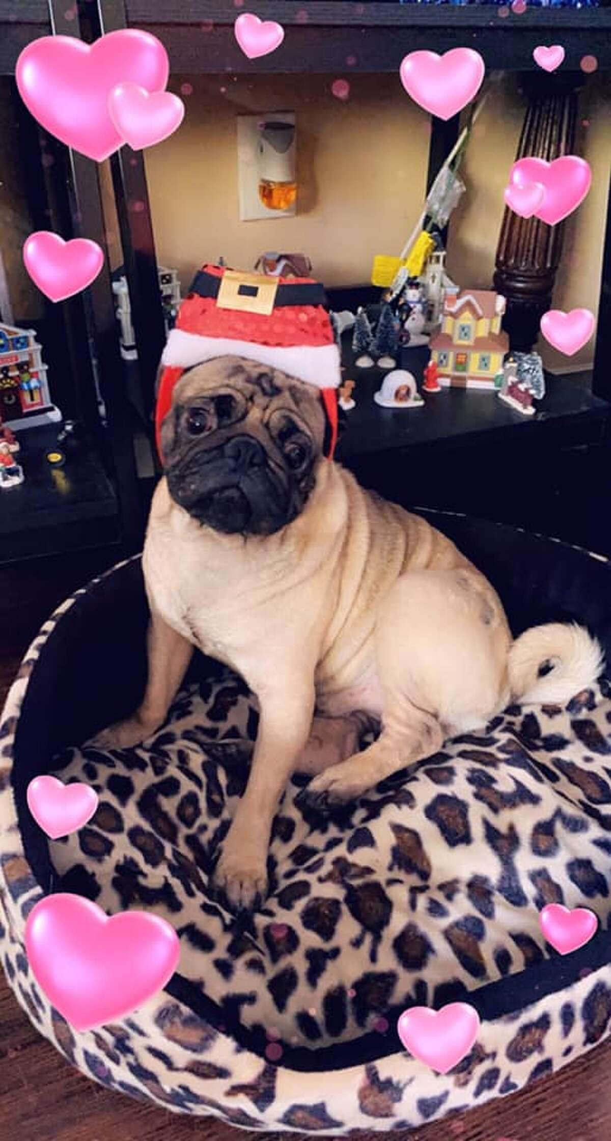 Sending you puppy love this holiday season.