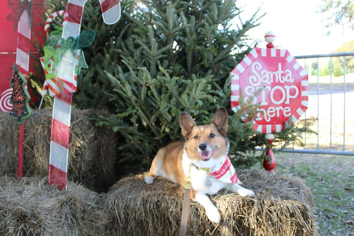 Kirby Pemberton from Spring at Old Time Christmas Tree Farm.