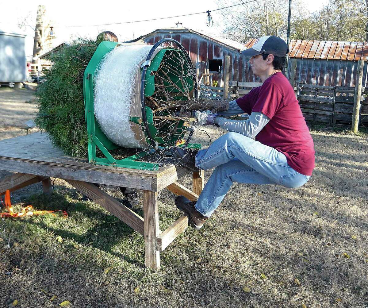 Isaiah Mondoza, 15, pulls a tree through plastic netting, to make it easier to transport at Holiday Acres Farm, a Christmas tree farm, Thursday, December 10, 2020, in Manvel.