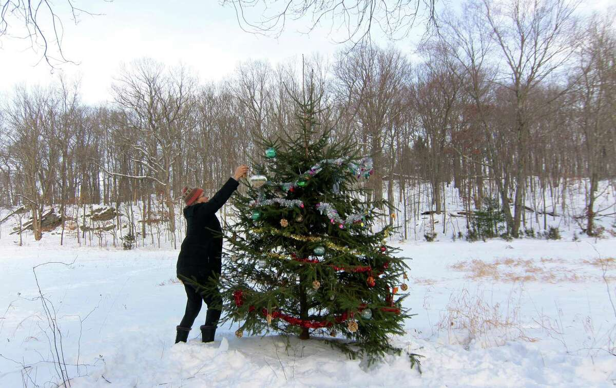 """Mary King, a member of the Shelton Land Conservation Trust, helps to decorate a """"Christmas Tree"""" that is located next to the Rec Path on the trust's Lane Street Property in Shelton on Saturday. The ornaments mainly consisted to edible ones to feed the wild birds and small animals on the property."""