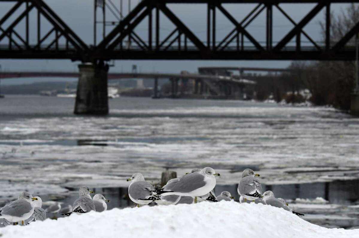 Ring-billed gulls roost on the icy banks of the Hudson River on Thursday, Dec. 24, 2020, at Corning Preserve in Albany, N.Y. (Will Waldron/Times Union)