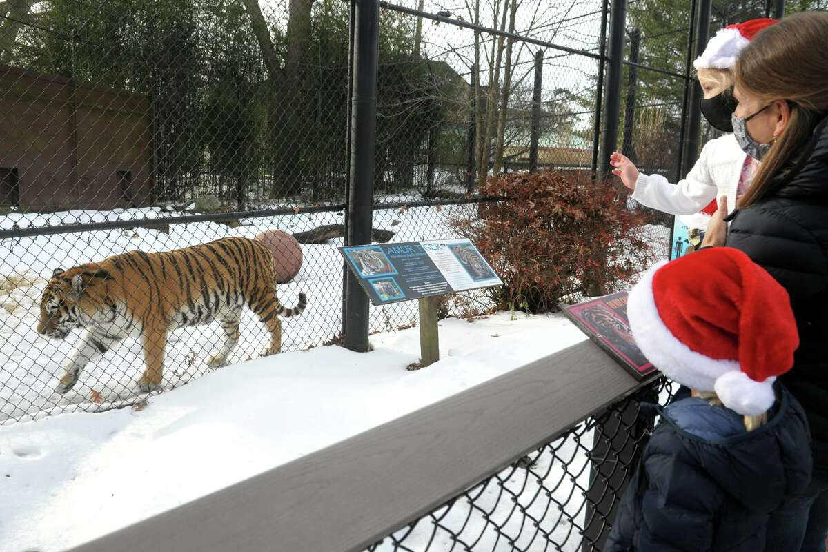 Sarah Sippel, of Greenwich, holds her daughter Remy as she and her other children Campbell, Ella and Shay watch the Amur tigers during a Christmas Eve visit to Connecticut's Beardsley Zoo, in Bridgeport, Conn. Dec. 24, 2020. The zoo has maintained many of its regular holiday programs, including its Winter Wonderland Walk, which includes 10 festive vignettes set up around the zoo, such as Fairy House Lane and the train display, Imagination Station.