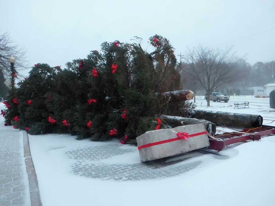 A 45-foot tall spruce was toppled by strong winds in downtown Manistee Wednesday night. (Scott Fraley/News Advocate)